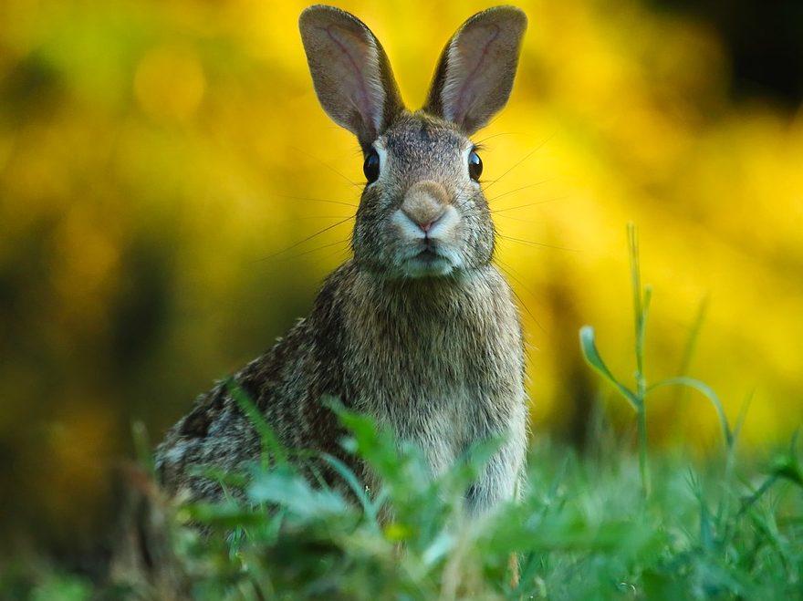 Tavşan Bakımı Hakkında