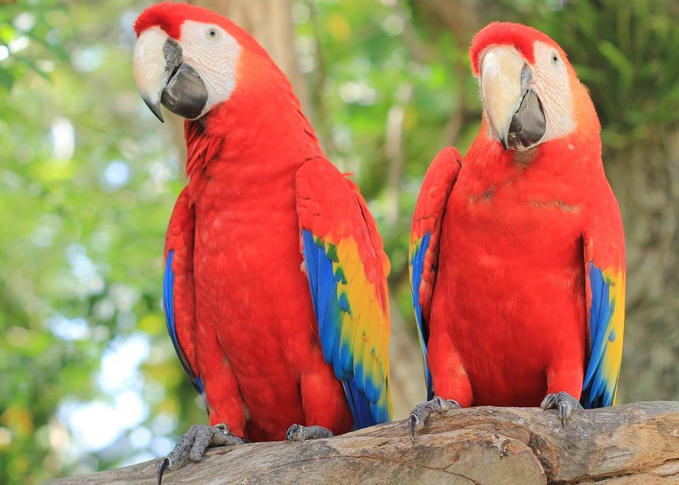 papağanlar hakkında genel bilgiler