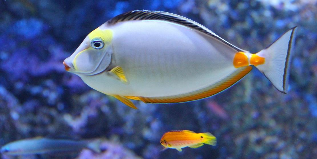 balık yemi ve çeşitleri