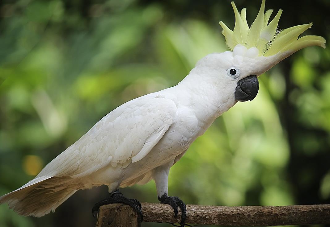 en çok konuşan papağan türleri 2
