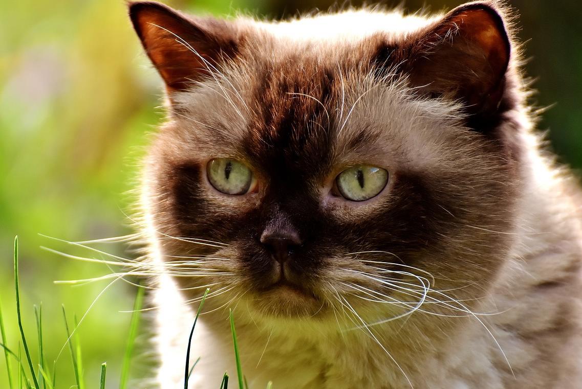 kediler neden kumuş ve yünlü battaniyeleri emer