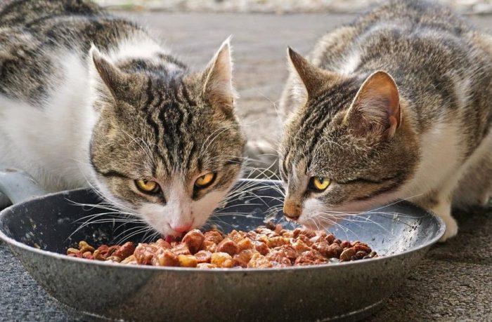 kısırlaştırılmış kedi maması nedir?