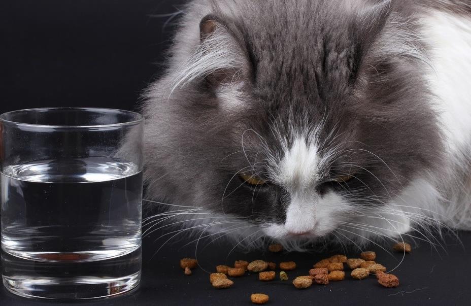 kısırlaştırılmış kedi maması nedir? çeşitleri nelerdir?