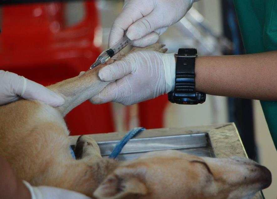 köpek sağlığı ve bakımı