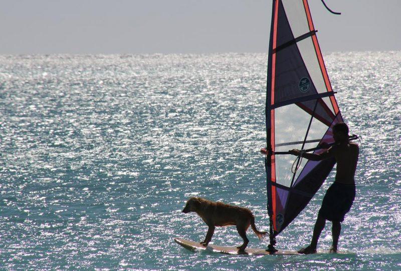 köpeğinizle tatil ve seyahat