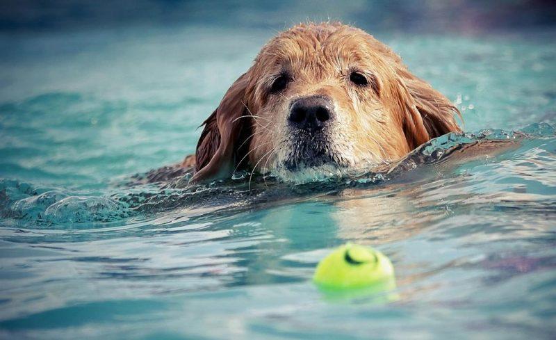 köpeklerde egzersizin önemi
