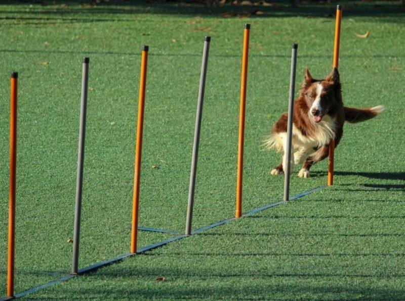 köpeklerde egzersiz