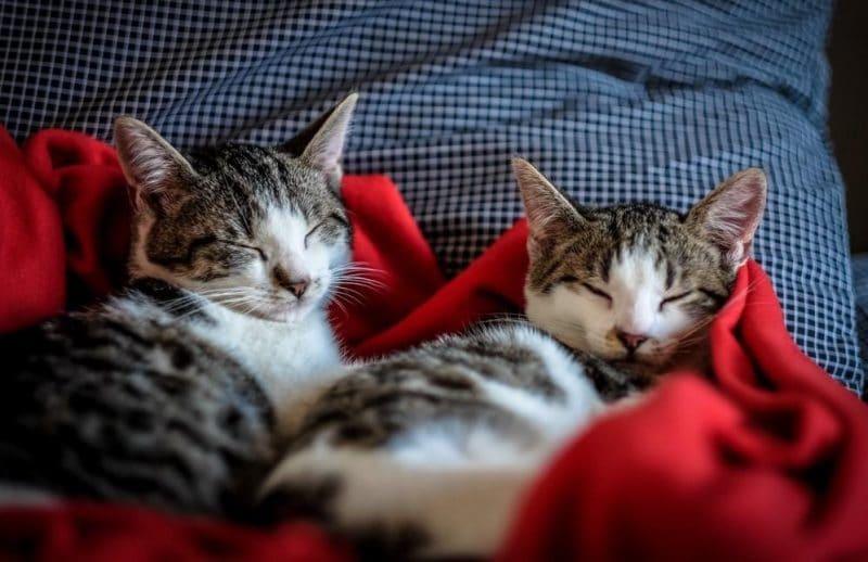 neden kediler soğuktan hoşlanmaz