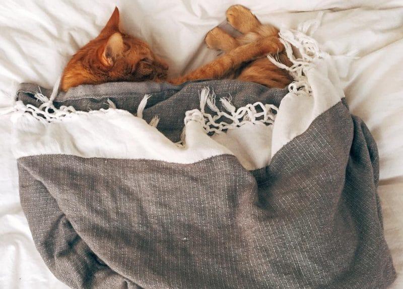 kedileri soğuktan korumak gerekir
