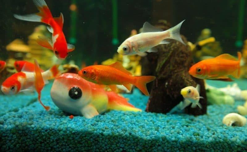 balık bakımında temel kurallar