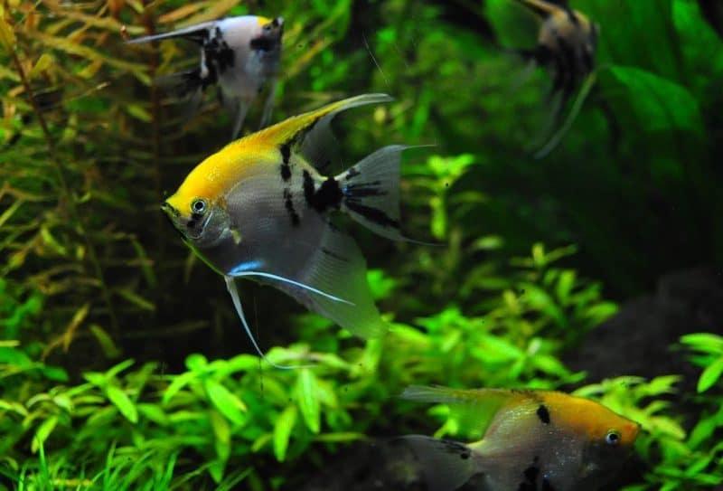akvaryum ve balık bakımı