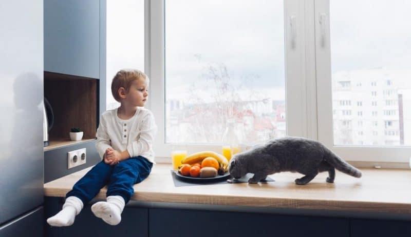 kedilerin mutfak tezgahına çıkması nasıl engellenir?