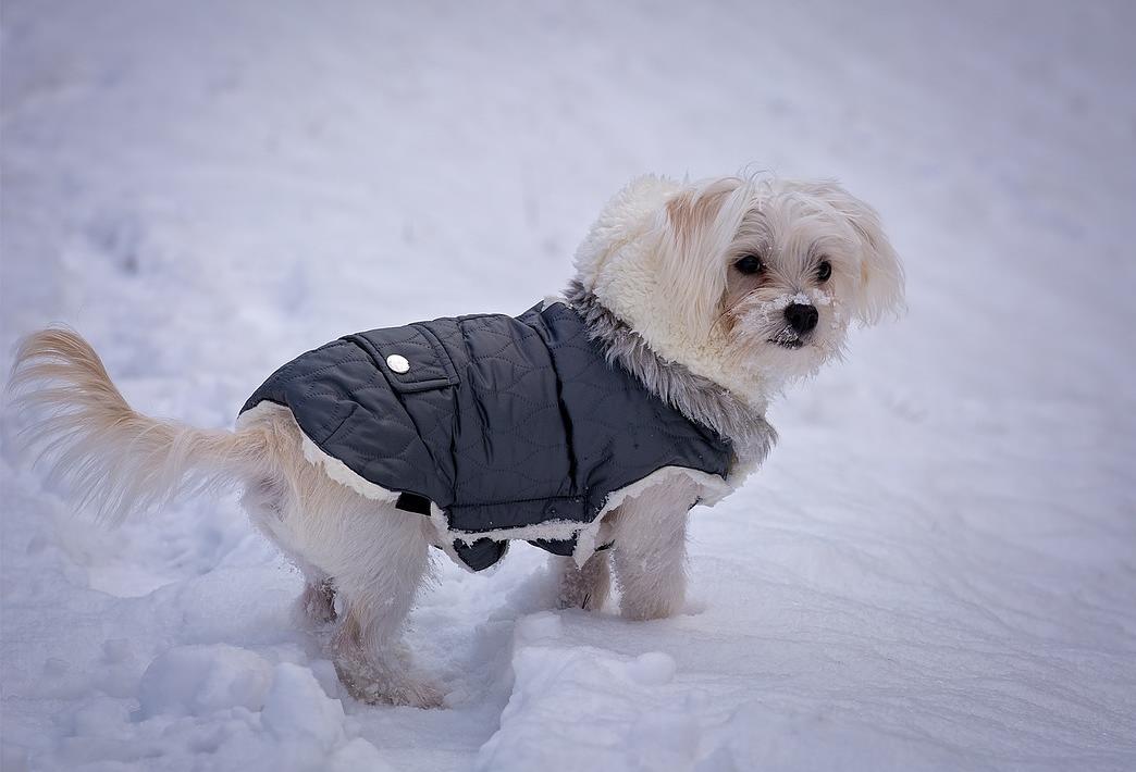 köpekler soğuk havalara dayanabilir mi?