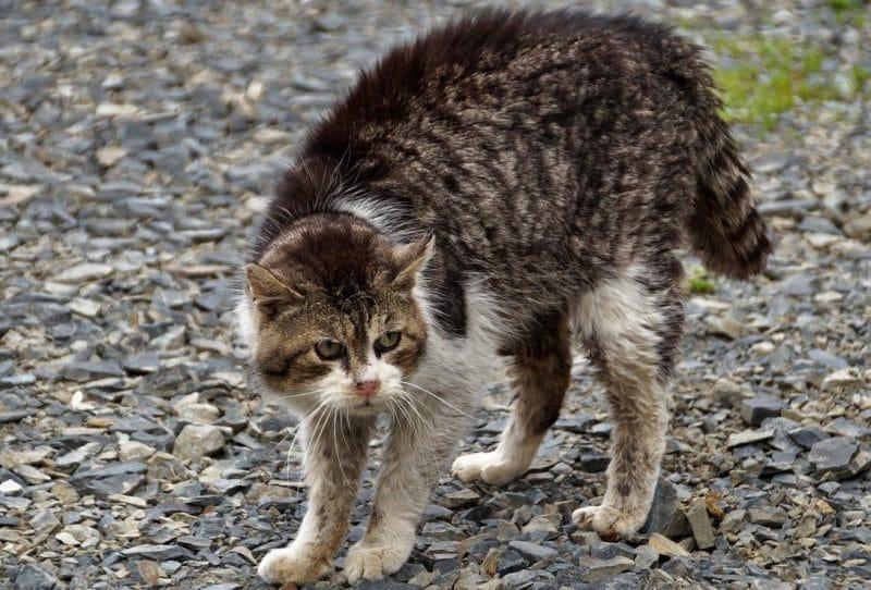 agresif kedilerle anlaşma