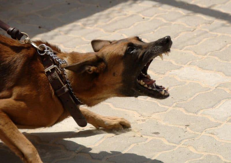 köpeklerde saldırganlık sorunu