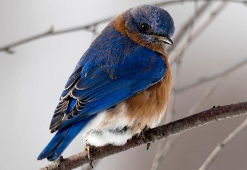 kuşların beden dili ve anlamı