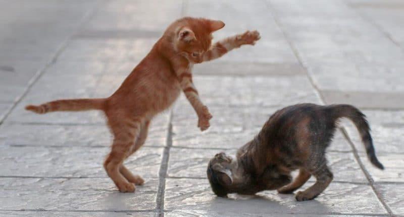kedilerin sert oyun oynamasını önlemek