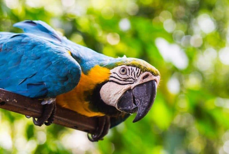 kuşlarda eğitim ve dikkat edilecekler
