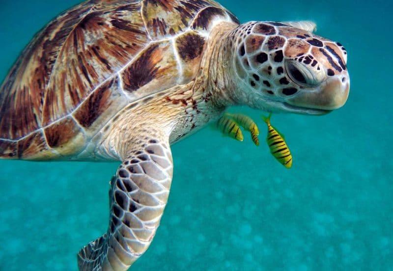 su kaplumbağası çeşitleri