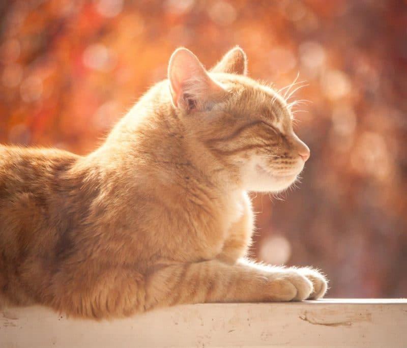 Kedilerde yaşlılık hastalıkları