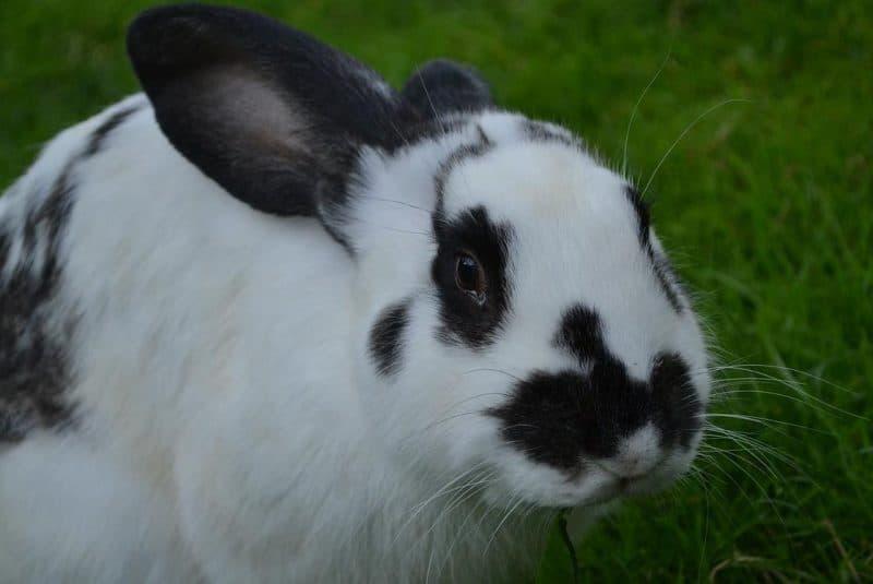 tavşanlarda davranış problemleri