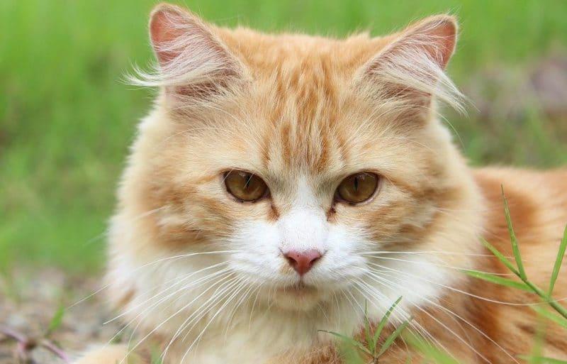 tekir kediler hakkında