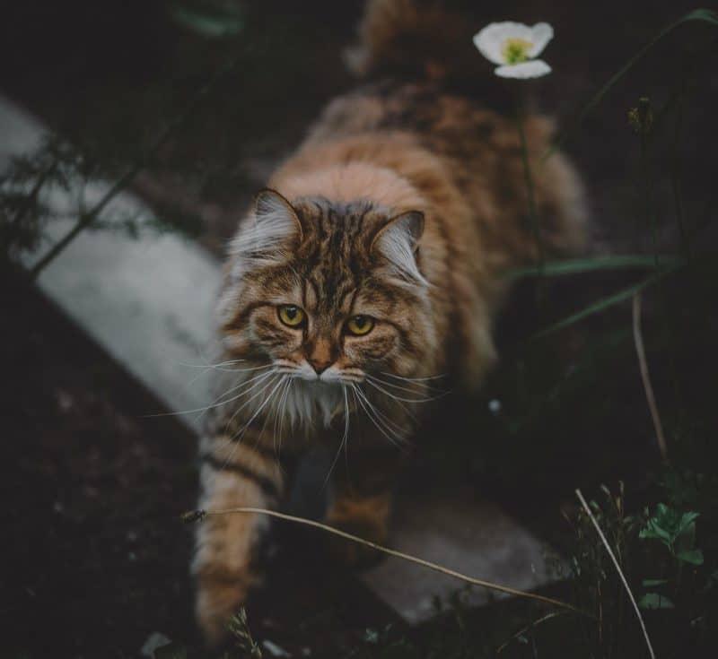 kedilerde kabızlık sorunu