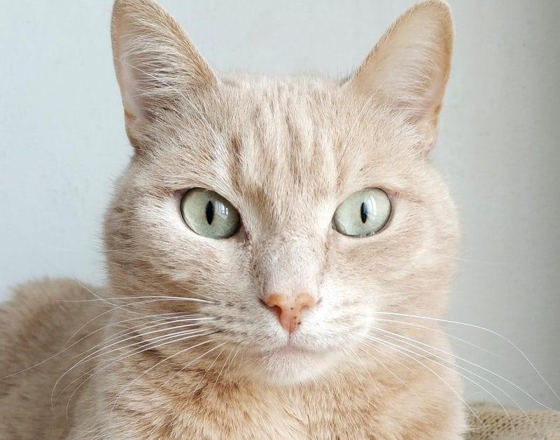 kedilerde yaşlılık