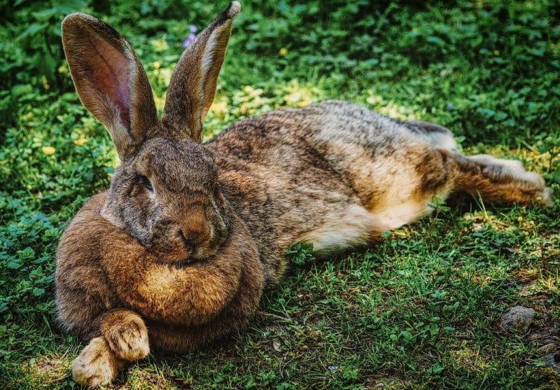 tavşan alırken dikkat edilecek konular