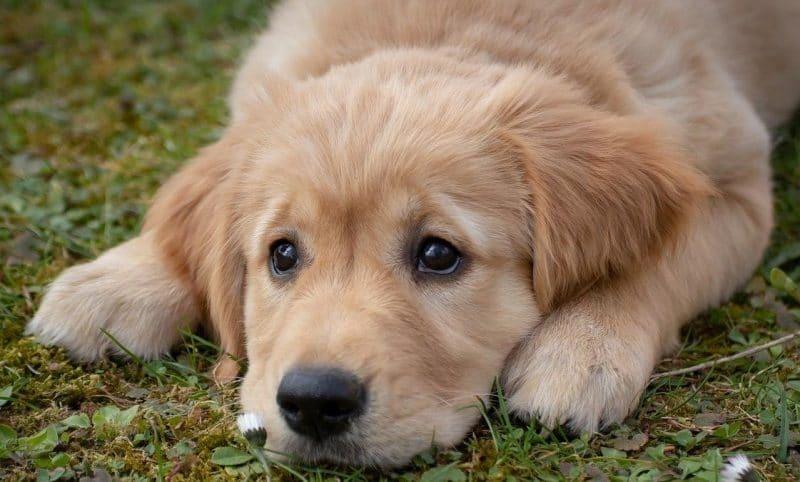 Köpeklerde kabızlık sorunu