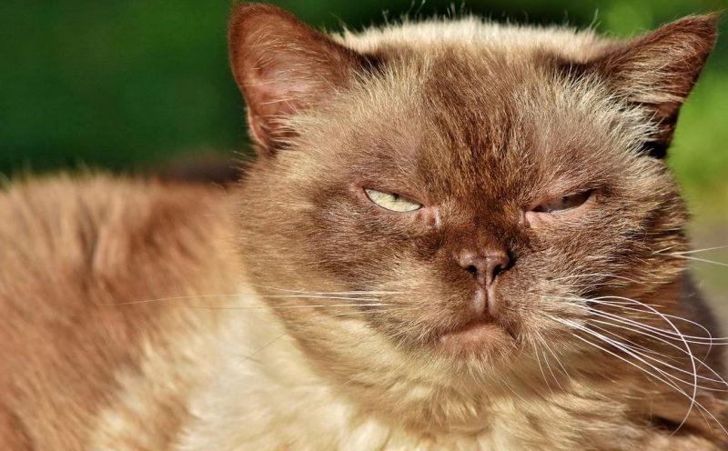 kedilerde idrar sorunları