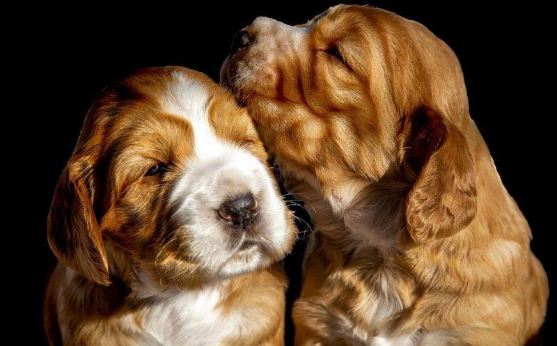 köpeklerin en önemli deri sorunları
