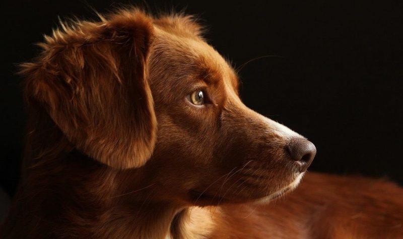köpeklerin deri sorunları
