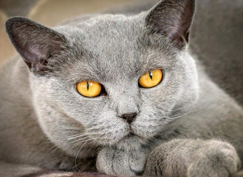 kedilerin eve çiş yapması ve nedenleri