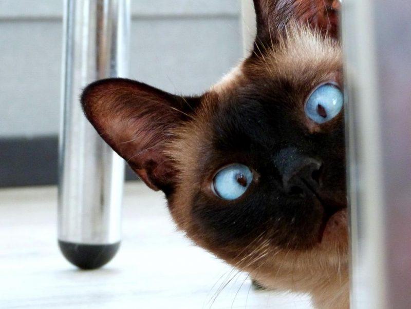 kedilerin eve çiş yapma sorunu