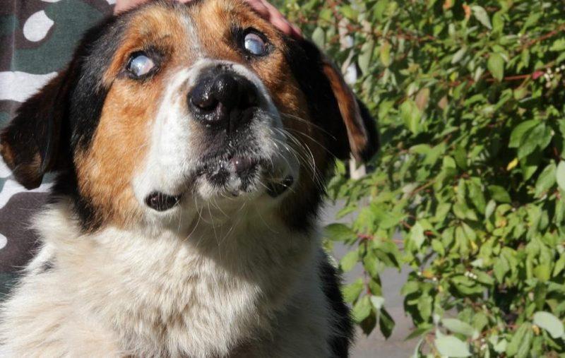 kör bir köpek ile yaşamak