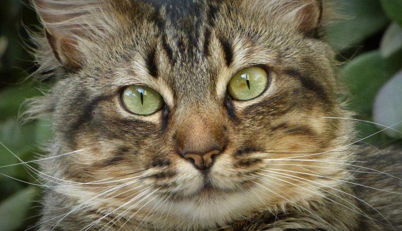 yaşlı kedi bakımı