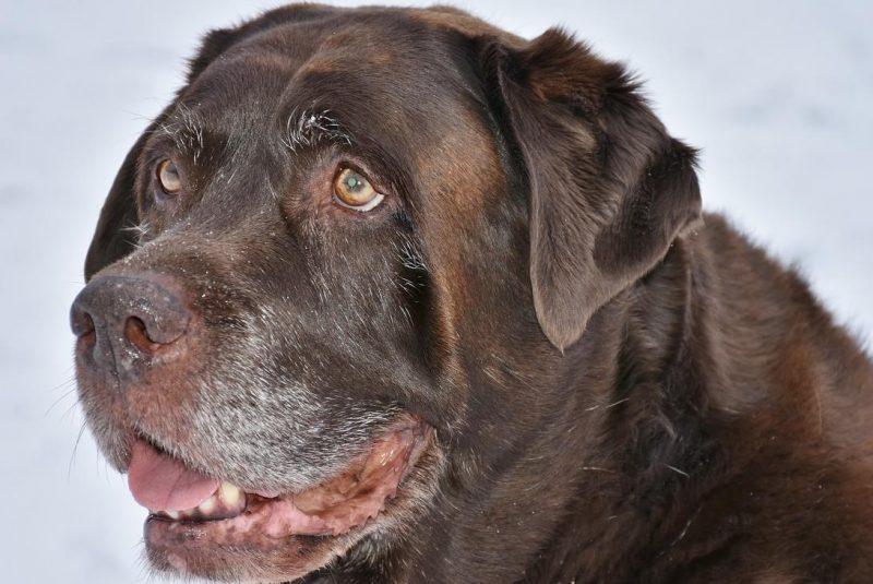 yaşlı köpeklerde bakım