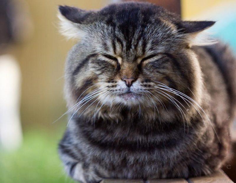 kedilerde karaciğer hastalıkları
