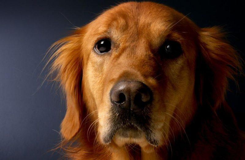 köpeklerde ağız içi tümörleri ve belirtileri