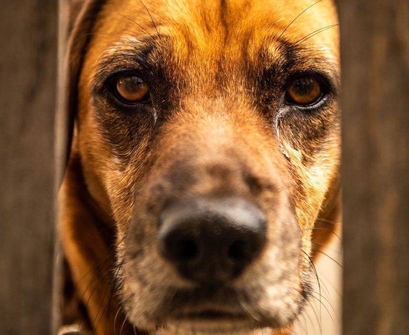 köpeklerde yaşlılık