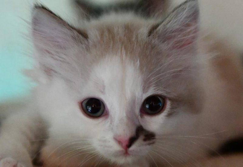 kedilerde iştahsızlık