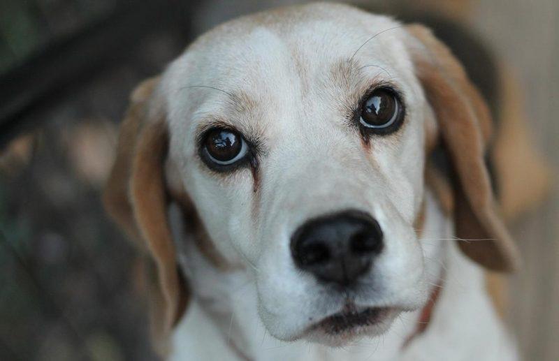 köpeklerde beslenme sorunları