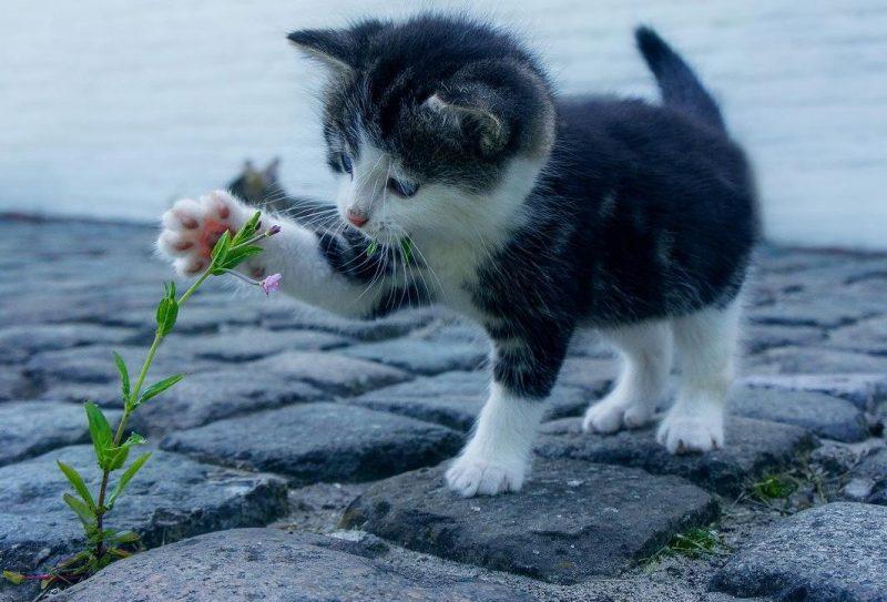 yavru kedi bakımı ve dikkat edilmesi gerekenler