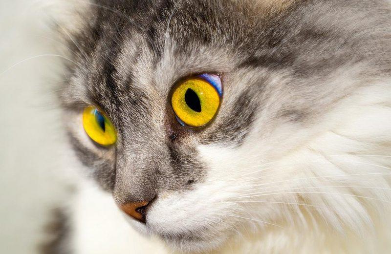 kedilerde ishal ve nedenleri