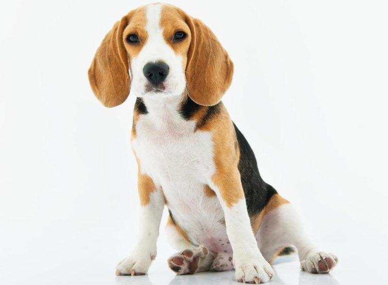 köpekler neden kusar